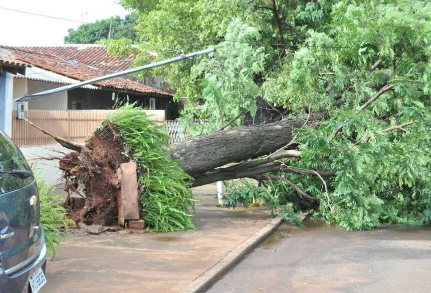 Árvore caiu sobre e rua e fiação no Bonança - Foto: Foto: Valdenir Rezende / Correio do Estado