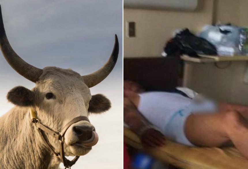Um homem tomou viagra para touros e precisou ser operado após ter ereção durante três dias