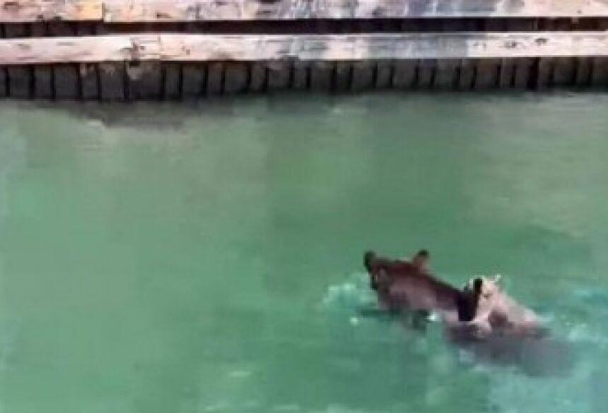 Mamãe urso salvou filhote que se afogaria num lago na Califórnia - Foto: Facebook / Reprodução