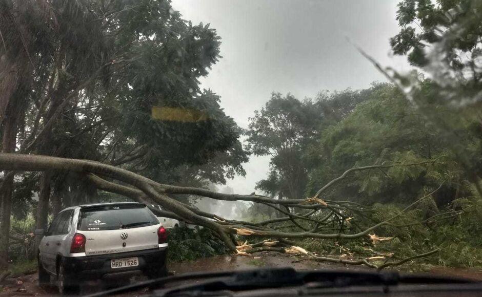 #ALERTA: Vento derruba árvore e interdita MS-376 entre Fátima do Sul e Dourados