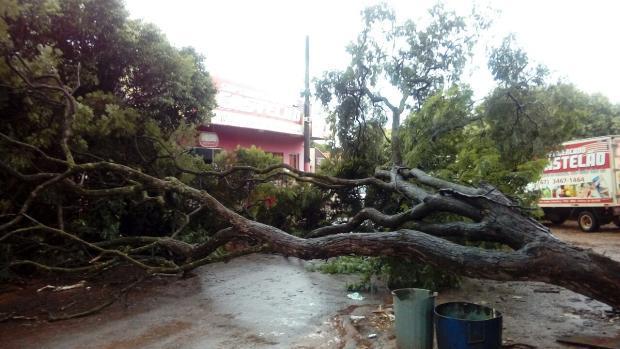 Árvore com tronco podre cai e por pouco não atinge carros, Bombeiros são acionados em FÁTIMA DO SUL