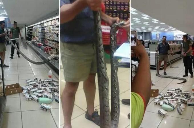 Cobra é retirada de geladeira com laticínios em supermercado | Reprodução/YouTube(HD News)