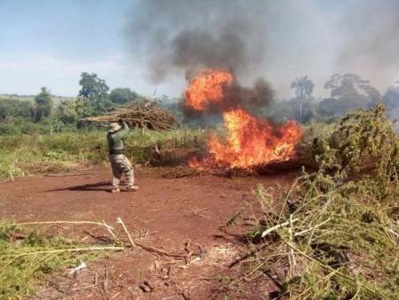 Maconha incinerada no Paraguai - Foto: Divulgação