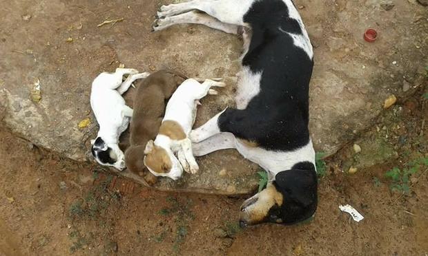 Foto registrada pela dona da cachorra com seus filhotes mortos