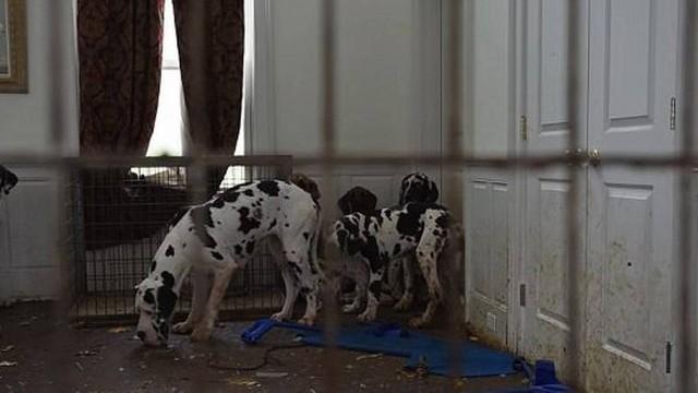 Más condições em que os cachorros estavam sendo mantidos Foto: Divulgação Humane Society of the United States
