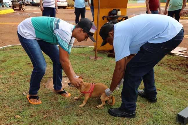 Vacinação de cães e gatos continua em Dourados; meta é vacinar 55 mil animais